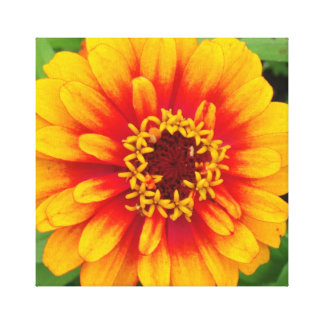 Vibrant Orange Dahlia Bloom Close Up Gallery Wrapped Canvas