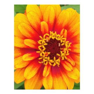 Vibrant Orange Dahlia Bloom Close Up Full Color Flyer