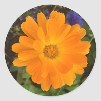 Vibrant Orange Dahlia Flower Classic Round Sticker