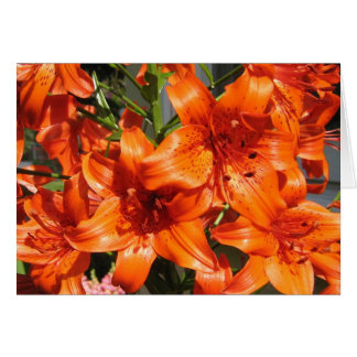 Vibrant Orange Tiger Lilies Card