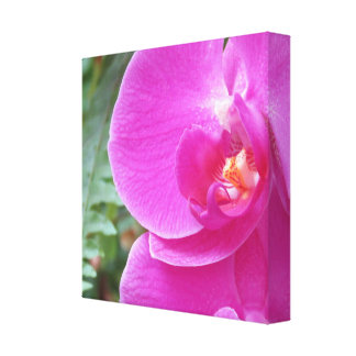 Vibrant pink orchid canvas print