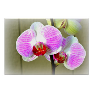 Vibrant Pink Orchids Poster