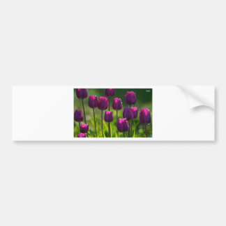 VIBRANT PURPLE TULIPS BUMPER STICKER