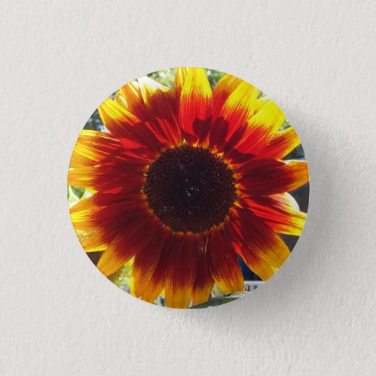 Vibrant Red and Yellow Sunflower Photo Button