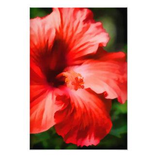 Vibrant Red Hibiscus Illustration Photo Art