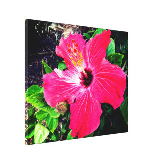 Vibrant Red Hibiscus In The Sunlight Canvas Print