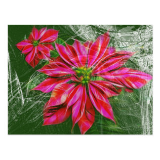 Vibrant red poinsettia horizontal postcard