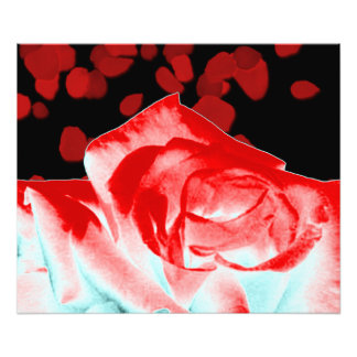 Vibrant Red Rose Photo Print