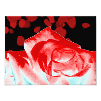 Vibrant Red Rose Photo Print