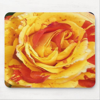 Vibrant rose mouse pads