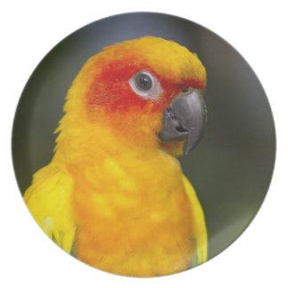 Vibrant Sun Conure Parrot Plate