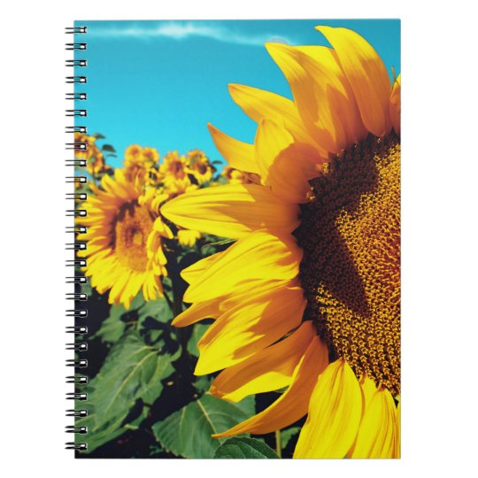 Vibrant Sunflowers against blue sky Notebook