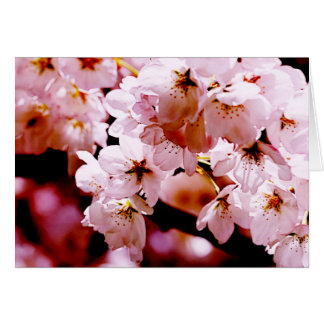 Vibrant trembling cherry blossom on branches greeting card
