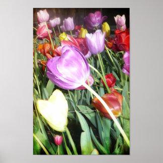 Vibrant Tulips Poster