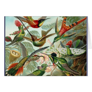 Vibrant Vintage hummingbirds art exotic tropical Card