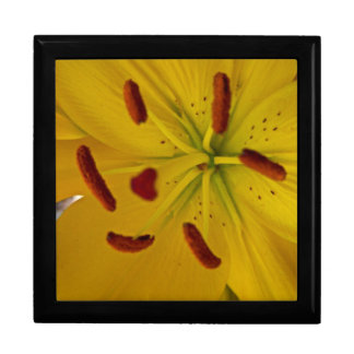 Vibrant Yellow Lily Large Square Gift Box