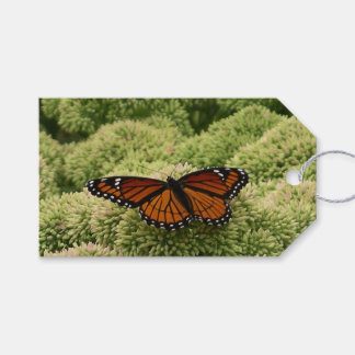 Viceroy Butterfly Beautiful Nature Photography Gift Tags
