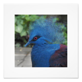 Victoria by Leslie Peppers Photo Print