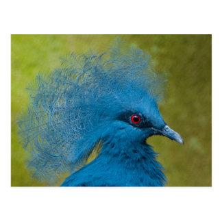 Victoria Crown Pigeon Postcard