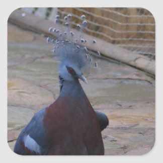 Victoria Crowned Pigeon Square Sticker