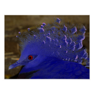 Victoria Crowned Pigeon Tropical Bird Poster