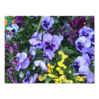 Victoria Flowers Photographic Print