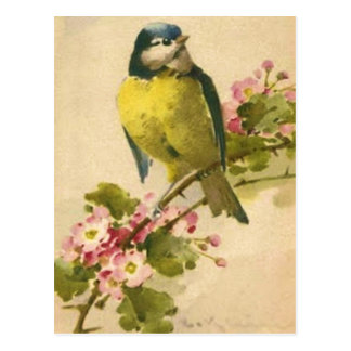 Victorian Bird Illustration Postcard