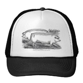 Victorian Engraving - Chester White Pigs Hat