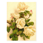 Victorian Ivory Rose Painting Postcards