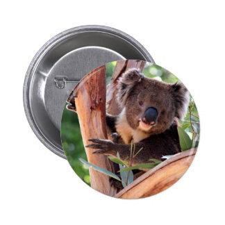 Victorian Koala Buttons