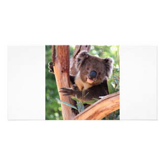 Victorian Koala Picture Card