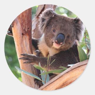 Victorian Koala Round Sticker