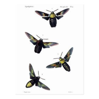 Victorian Moths Postcard