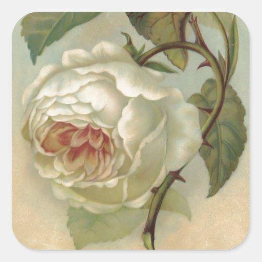 Victorian Rose Postcard Illustration Square Sticker