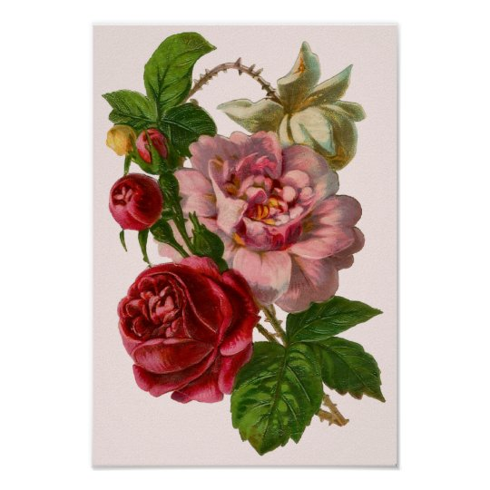 Victorian Roses Poster