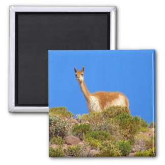 vicuña blue magnet