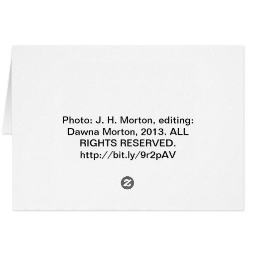 view from the Astoria Column Astoria–Megler Bridge Card