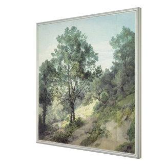 View near Cantonteign, Devon Canvas Print