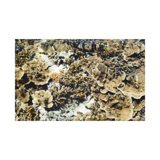 View of a coral reef canvas prints
