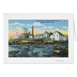 View of a Fish Hatchery, Lobster Rearing Card