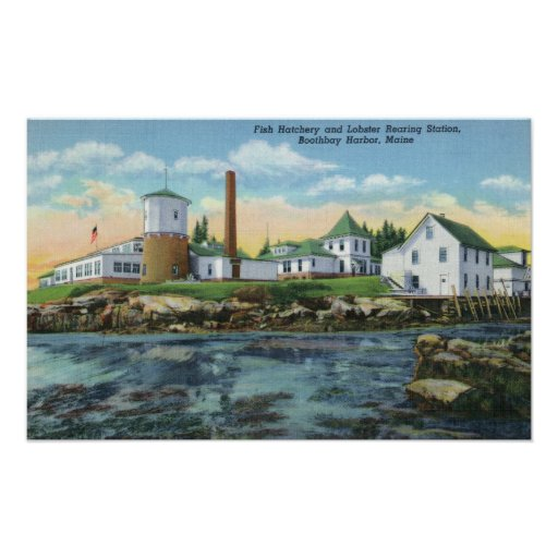 View of a Fish Hatchery, Lobster Rearing Posters