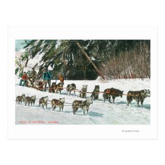 View of a Husky Dog-Sled Team Postcard