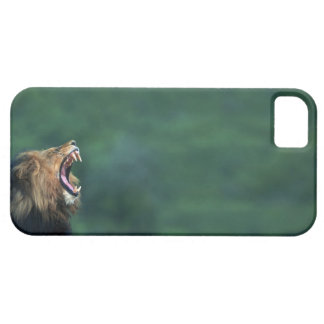 View of a Lion (Panthera leo) laying on the Barely There iPhone 5 Case