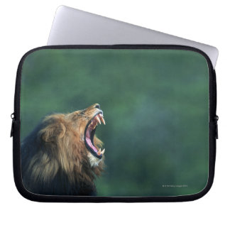 View of a Lion (Panthera leo) laying on the Laptop Sleeve