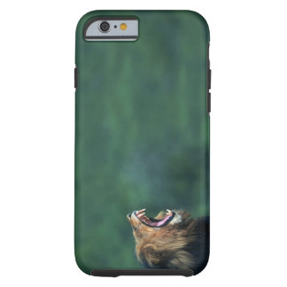View of a Lion (Panthera leo) laying on the Tough iPhone 6 Case