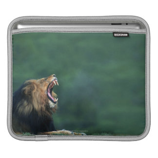 View of a Lion (Panthera leo) opening its mouth iPad Sleeve