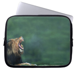 View of a Lion (Panthera leo) opening its mouth Laptop Sleeve