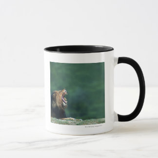 View of a Lion (Panthera leo) opening its mouth Mug