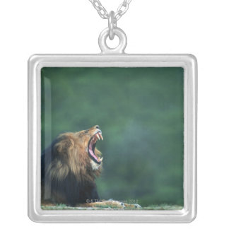 View of a Lion (Panthera leo) opening its mouth Silver Plated Necklace