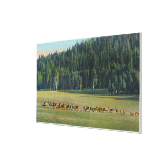 View of a Pack of Deer Grazing Canvas Print